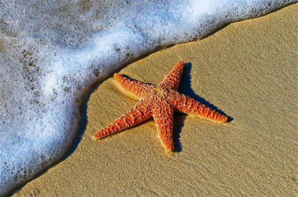 starfish on a beach in key west